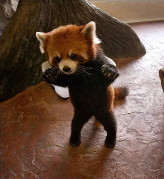 C'est décidé, il prend des cours de boxe !