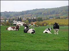 Nous sommes dans le Grand-Est, à Vigneulles. Village de l'arrondissement de Lunéville, il se situe dans le département ...