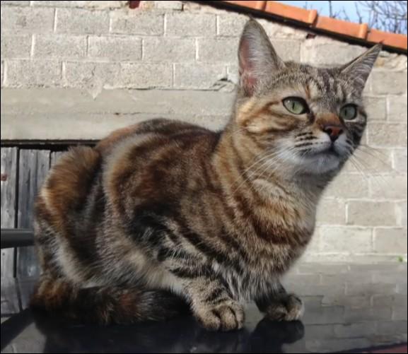Comment s'appelle la chatte d'Obfiction et qu'elle âge a-t-elle ? (à l'époque où elle en a parlé bien sûr)