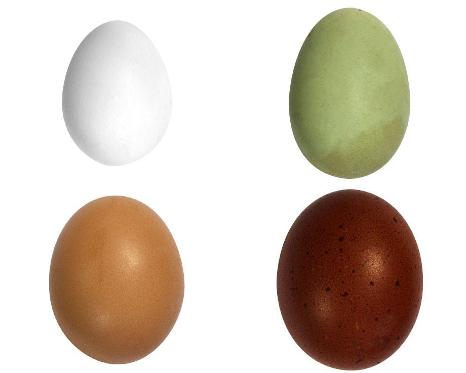 La preuve par l'œuf [2e partie]