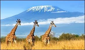 Quel pays abrite le Kilimandjaro ?