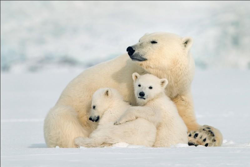 Par quoi sont principalement menacés les ours polaires ?