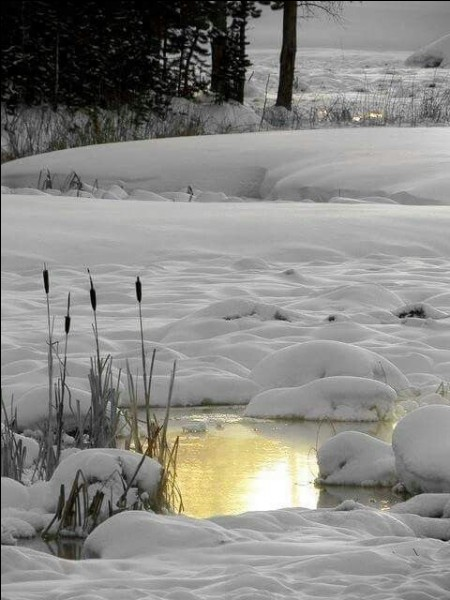 """A-t-il écrit """"L'Or sous la neige"""" ?"""