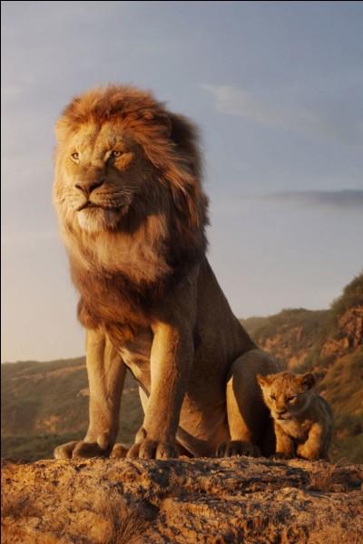 Le lion est-il le plus gros félin au monde ?