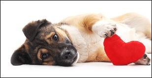 Ton chien aime-t-il vraiment les gens ?