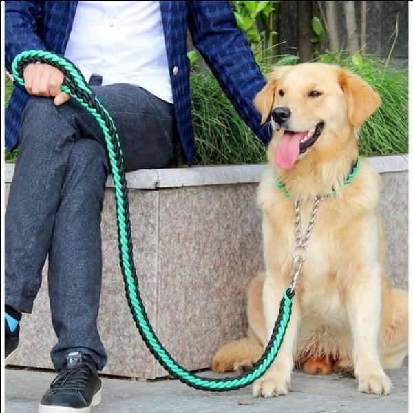 Reste-t-il calme quand tu marches dans la rue, quand il rencontre un inconnu ou un autre chien ?