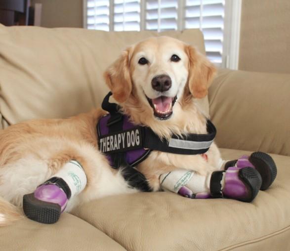 Ton chien ferait-il un bon chien de thérapie ?