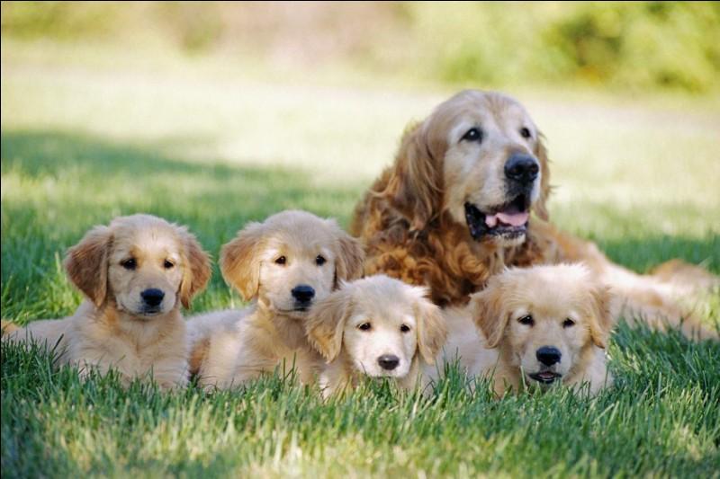 Combien de temps peut vivre un chien ?