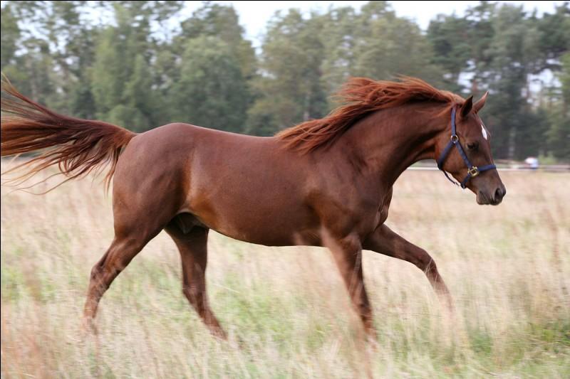 Complète - Ce cheval est un ... brûlé