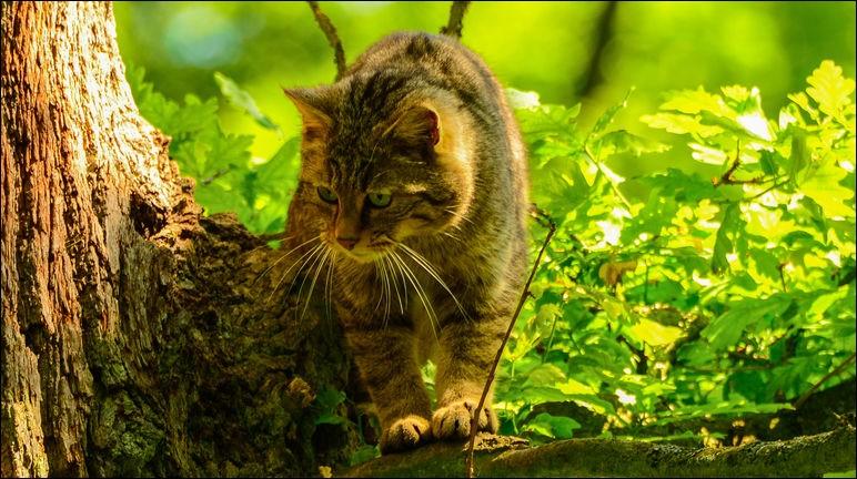 Qui rencontre-t-il en premier lorsqu'il s'aventure dans la forêt ?
