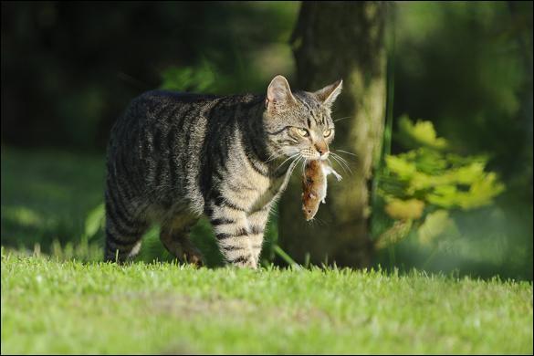Ton chat te rapporte une souris vivante.