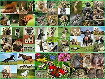 Aimes-tu vraiment les animaux ?
