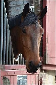 Que faut-il faire pour ne pas effrayer un cheval en rentrant dans son box ?