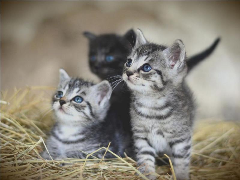 Les chatons, pour toi, sont :