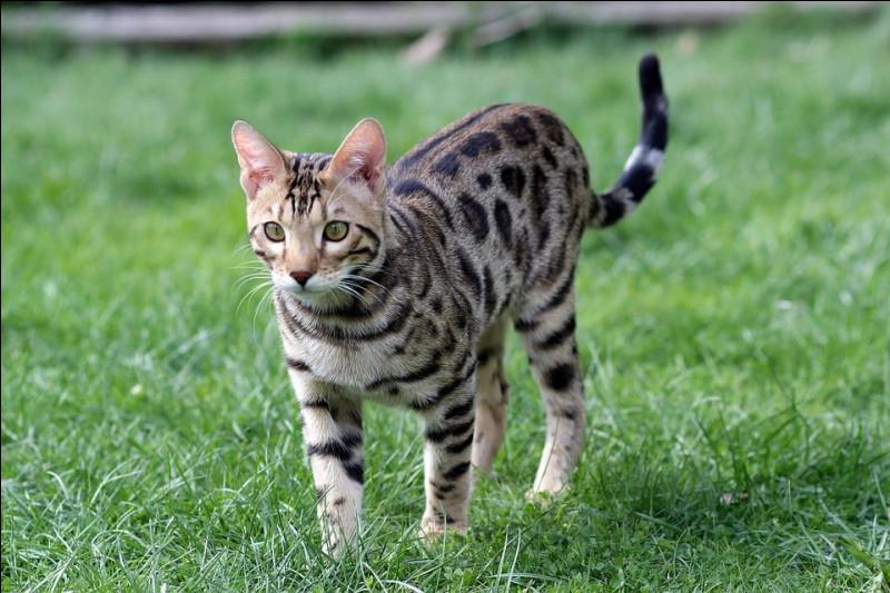 Tu croises un jeune chat seul et blessé dans la forêt, que fais-tu ?