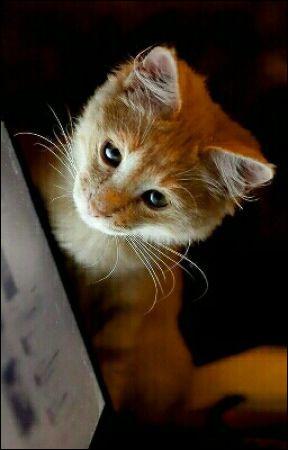 Un chat domestique arrive, que penses-tu ?