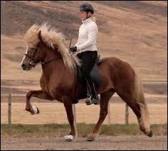 À quelle race appartient ce cheval ?