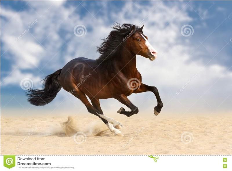 Laquelle de ces propositions n'est pas une tâche de tête du cheval ou poney ?