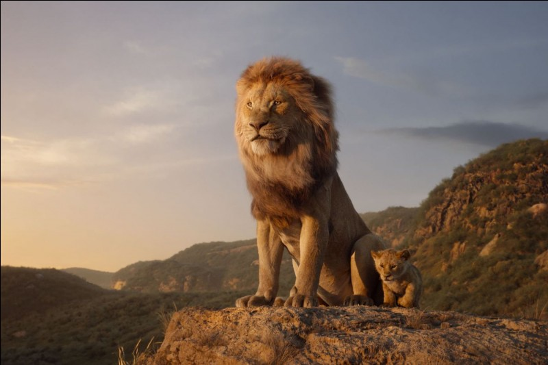 Où peut-on trouver des lions sauvages ?