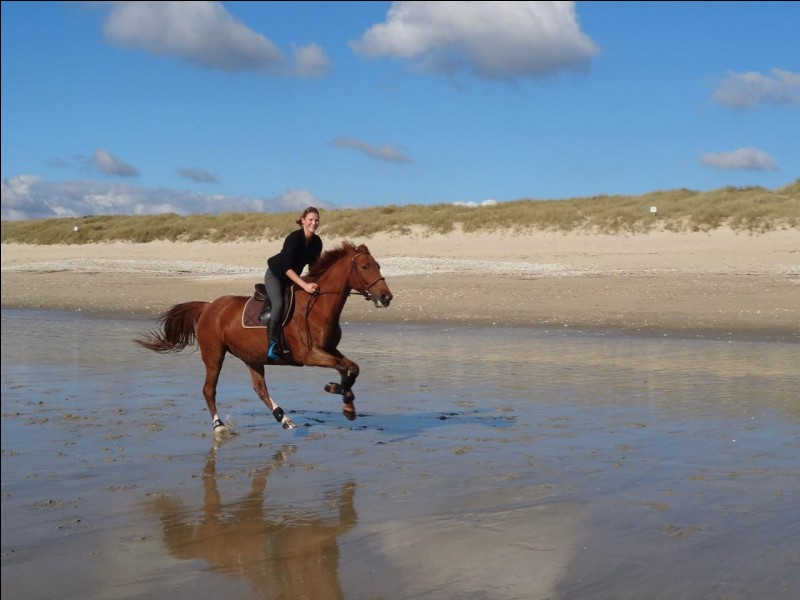 On peut devenir ami avec un cheval.