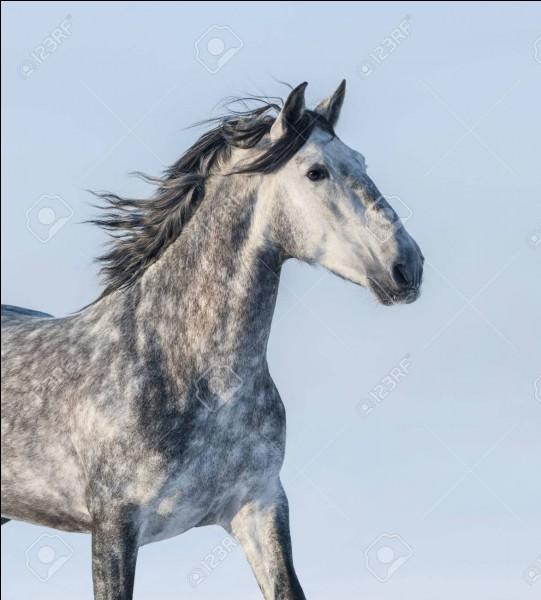 Quel cheval est bai ?