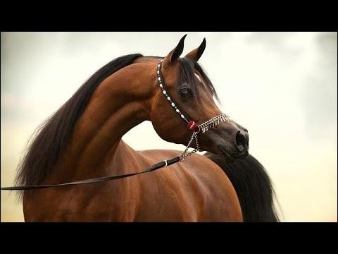 Bah c'est facile ! Quelle est la race de ce cheval ?