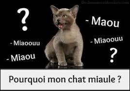 Pourquoi le chat miaule-t-il ?