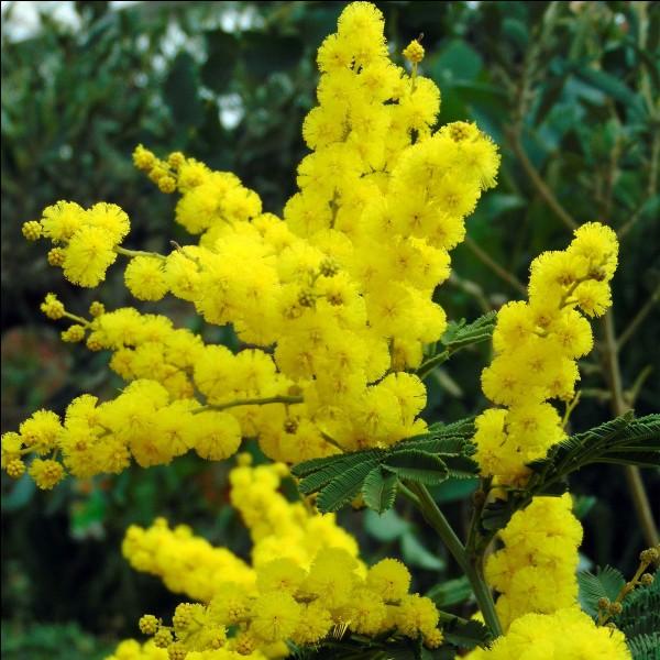 Et on termine avec l'arbuste qui porte la reine des fleurs d'hiver !