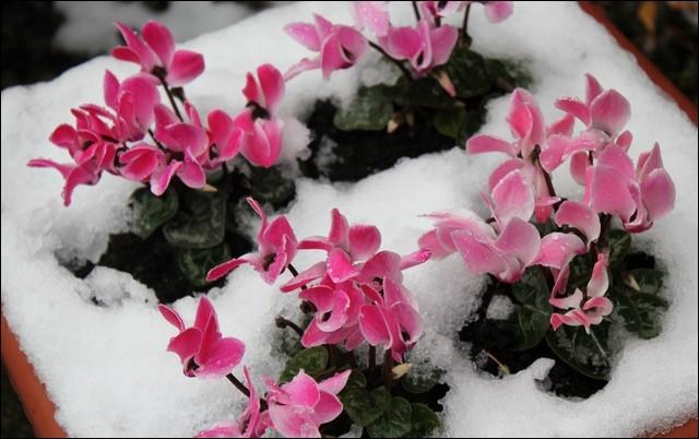 Les fleurs en hiver