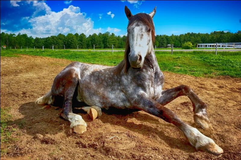 Quelles sont les friandises que l'on peut donner aux chevaux ?