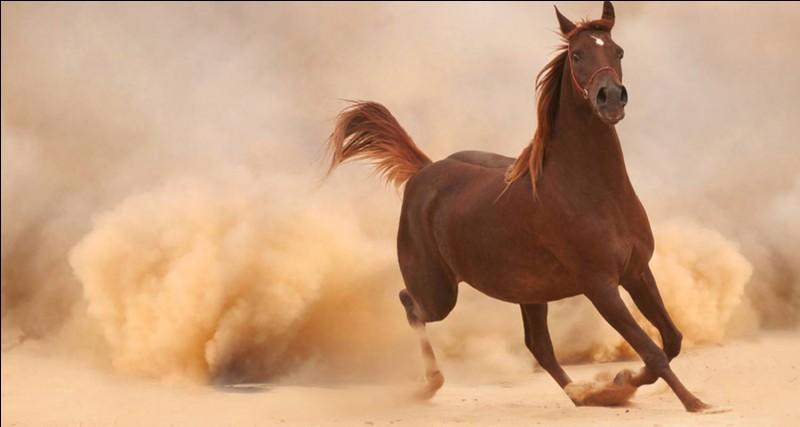 Comment s'appellent les marques blanches sur les pattes du cheval ?