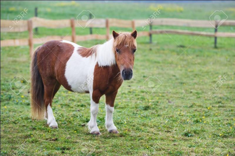Galop 4 : le cheval est un...