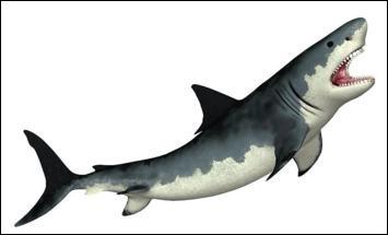 Comment s'appelle l'ancêtre du requin blanc ?