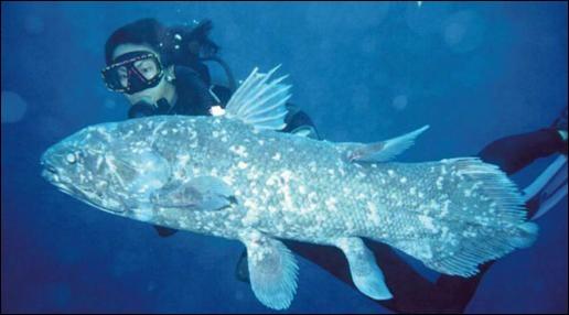 Quel poisson préhistorique a traversé l'histoire et existe encore de nos jours ?