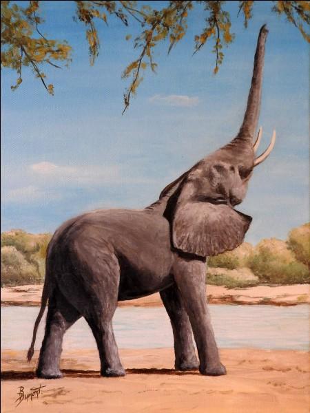 Continuons sur le thème des animaux, la chasse des éléphants est strictement interdite. Comment nomme-t-on la chasse interdite ?