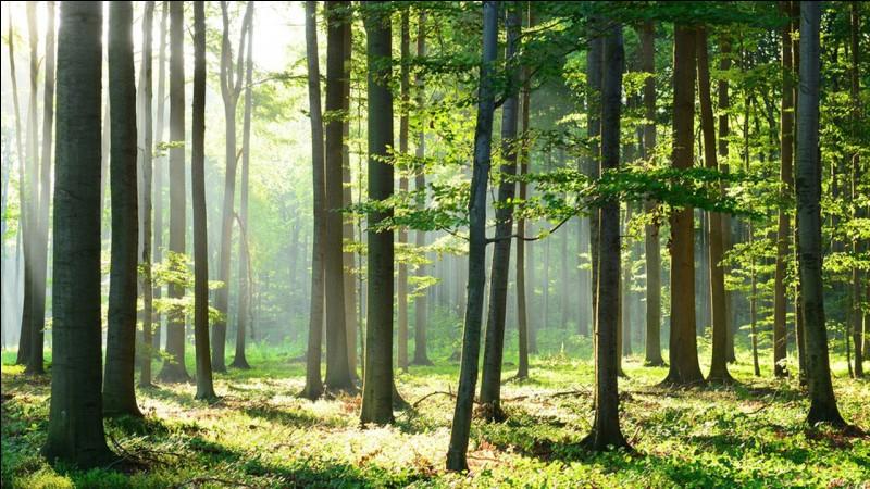 Pourquoi les industriels détruisent-ils la forêt amazonienne ?