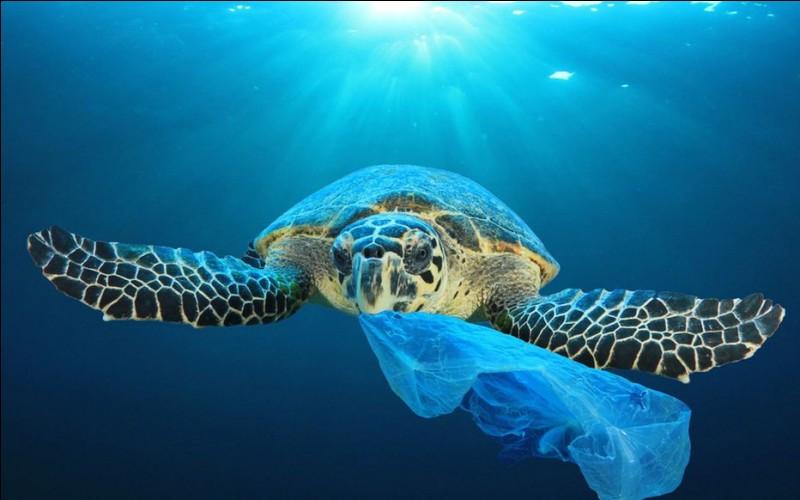 Est-ce vrai qu'un continent de plastique s'est formé au milieu de l'océan Pacifique ?
