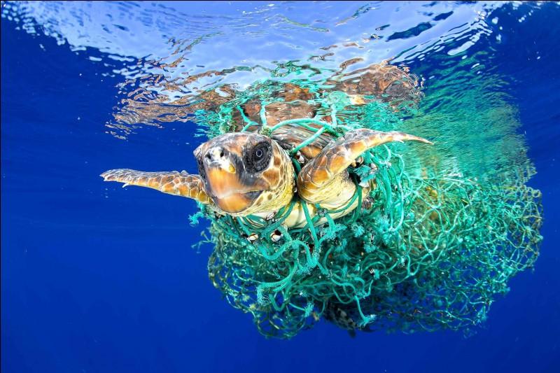 Combien de temps faut-il pour qu'un sac plastique se décompose ?