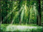 Quel est le premier principe de l'écologie ?