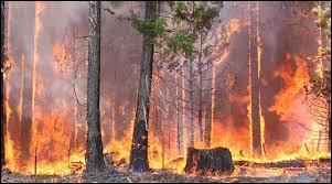 Les feux de forêt actuels en Amazonie concernent quels pays ?