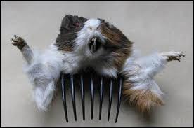 Quelle est sa coupe de cheveux ?