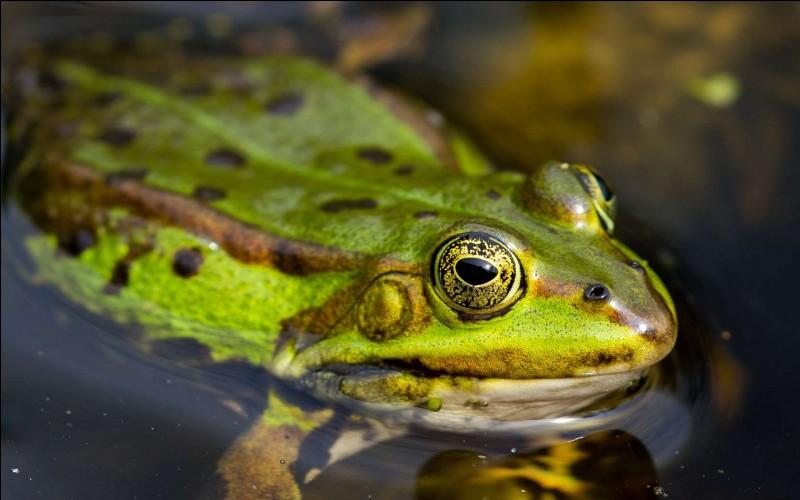 Quelle est la réaction d'une grenouille intacte lorsqu'une personne s'approche d'elle ?