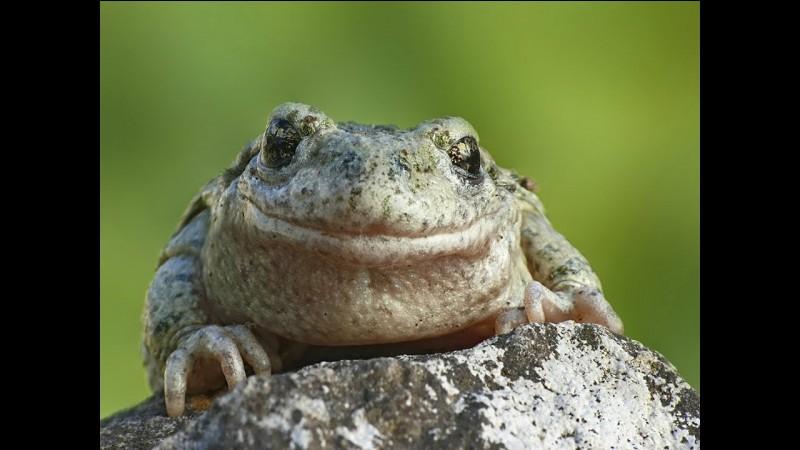 Quelle est la réaction d'une grenouille au cerveau détruit lorsqu'une personne s'approche d'elle ?