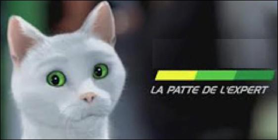 Quelle entreprise spécialisée dans l'entretien et la vente d'accessoires automobiles utilise le chat aux yeux verts Ramsès dans ses publicités ?