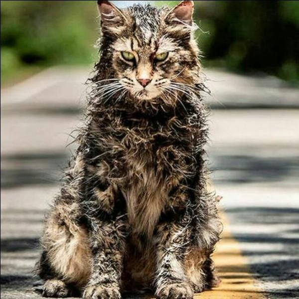 """Comment s'appelle le chat dans """"Simetierre"""" ?"""