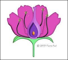 Quelles sont les parties de la fleur qui existent ? (3 réponses)