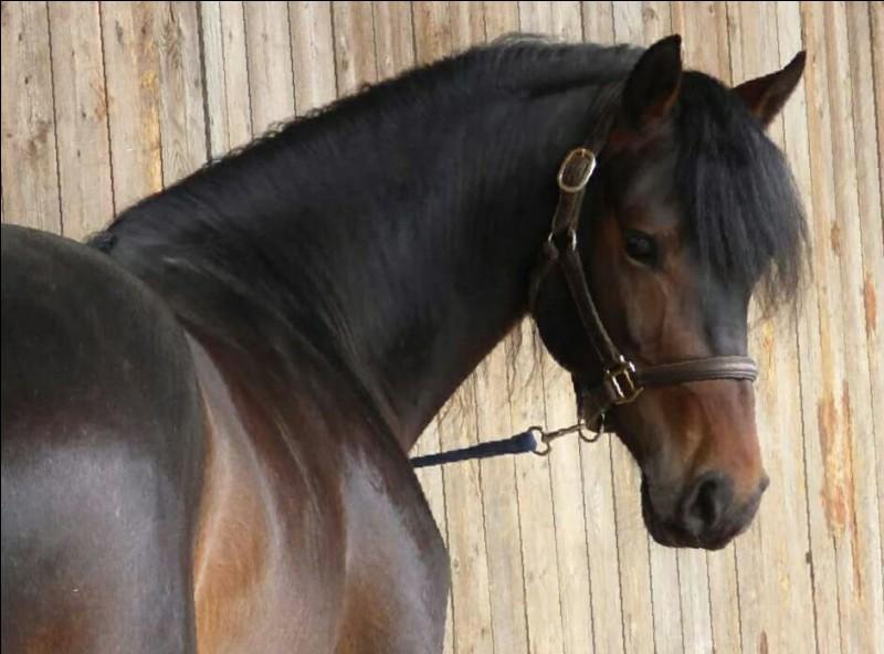 Le caractère de ton cheval serait...