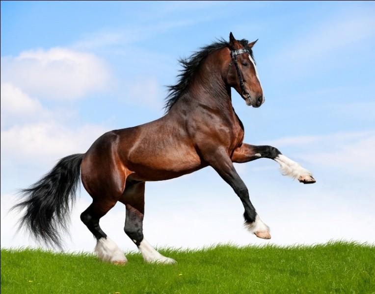 Qu'est-ce qu'un cheval pour toi ?