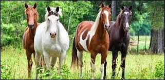 Ton cheval serait...