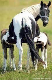 Quelle race de cheval pour toi ?